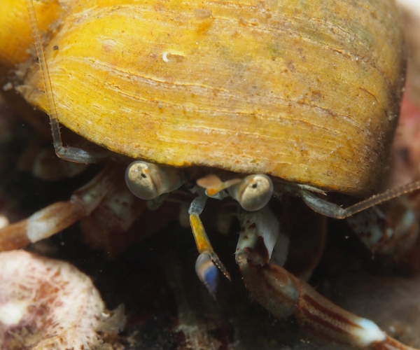 Photo of a hermit crab by Jo Kaye
