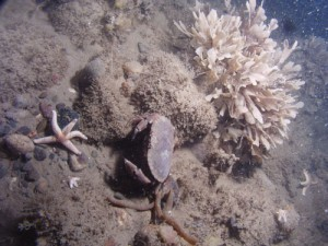 hornwrack, starfish, and edible crab